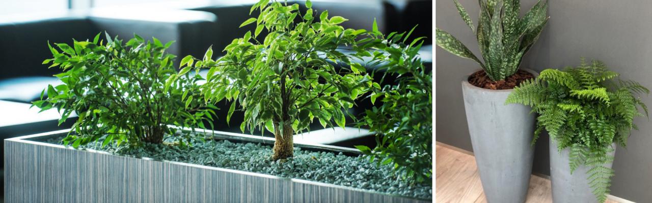 Kantoorbeplanting Tuincentrum de Mooij
