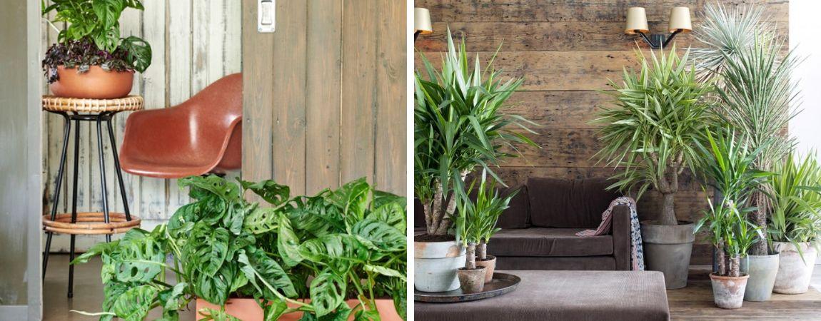 Kamerplanten met pot: mooie combinaties van diverse planten
