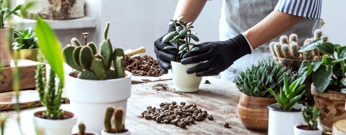 Cactussen en vetplanten verzorgen