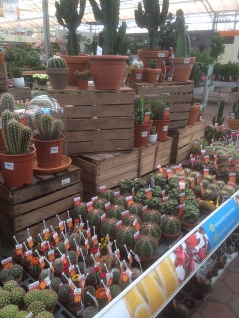 Mooie kamerplanten kopen in de buurt van Leiden?