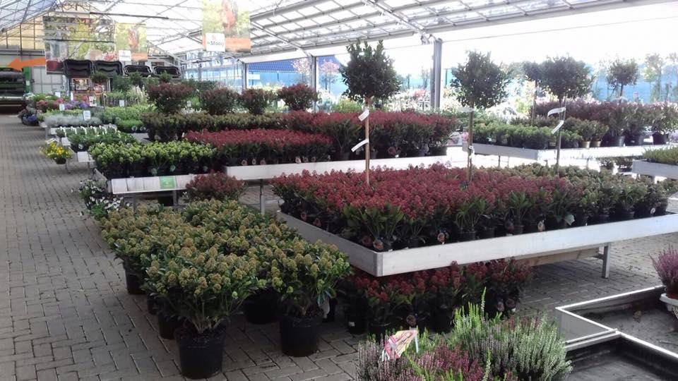Tuinplanten kopen in de buurt van Leiden; Tuincentrum de Mooij!