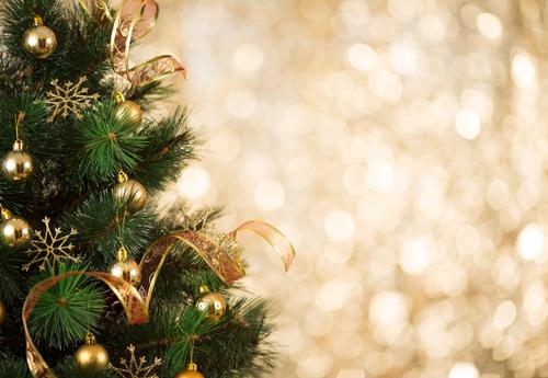 Kerstbomen kopen in Rijnsburg of online in onze webshop!